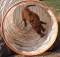 Hundetraining, Spiele Hund