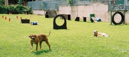 Hunde Parcours, Bens Hundeschule