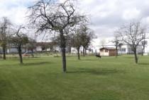 Bäume, Park, Rasenfläche