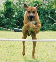 Hund, Training Hund
